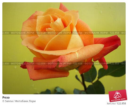 Купить «Роза», фото № 122858, снято 7 сентября 2007 г. (c) Sanna / Фотобанк Лори