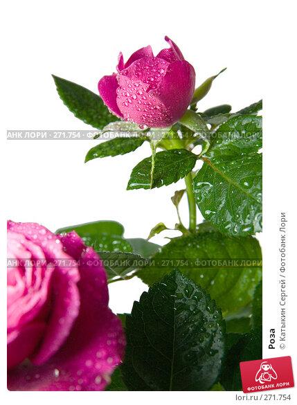 Роза, фото № 271754, снято 17 апреля 2008 г. (c) Катыкин Сергей / Фотобанк Лори