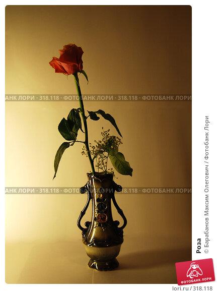 Купить «Роза», фото № 318118, снято 21 марта 2008 г. (c) Барабанов Максим Олегович / Фотобанк Лори