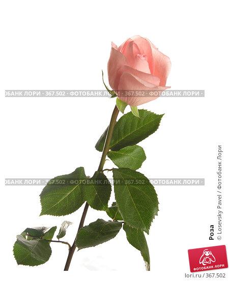 Купить «Роза», фото № 367502, снято 7 ноября 2005 г. (c) Losevsky Pavel / Фотобанк Лори