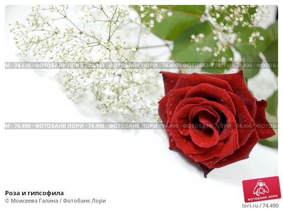 Роза и гипсофила, фото № 74490, снято 21 мая 2007 г. (c) Моисеева Галина / Фотобанк Лори