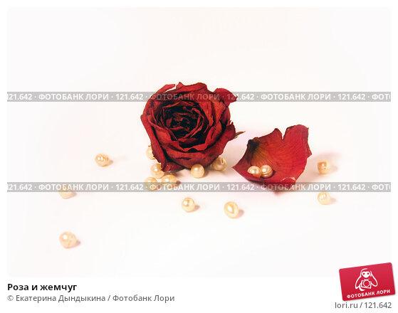 Купить «Роза и жемчуг», фото № 121642, снято 15 ноября 2007 г. (c) Екатерина Дындыкина / Фотобанк Лори