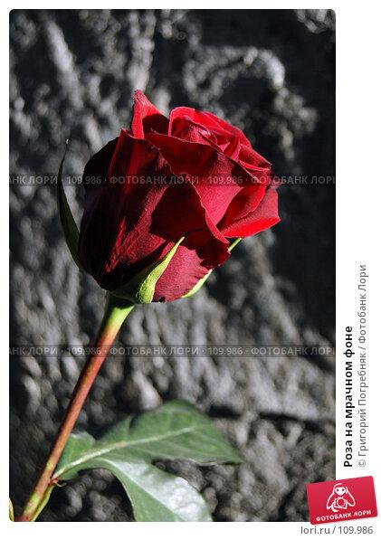 Роза на мрачном фоне, фото № 109986, снято 5 ноября 2007 г. (c) Григорий Погребняк / Фотобанк Лори