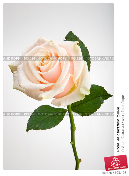 Роза на светлом фоне, фото № 193126, снято 30 января 2008 г. (c) Иван Сазыкин / Фотобанк Лори