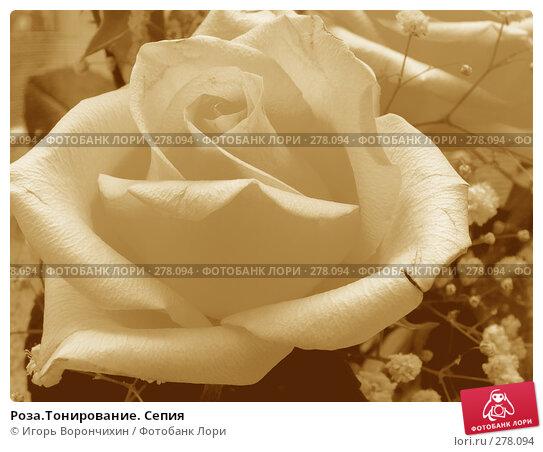 Роза.Тонирование. Сепия, фото № 278094, снято 22 июня 2007 г. (c) Игорь Ворончихин / Фотобанк Лори