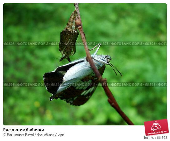 Рождение бабочки, фото № 66598, снято 25 июня 2005 г. (c) Parmenov Pavel / Фотобанк Лори