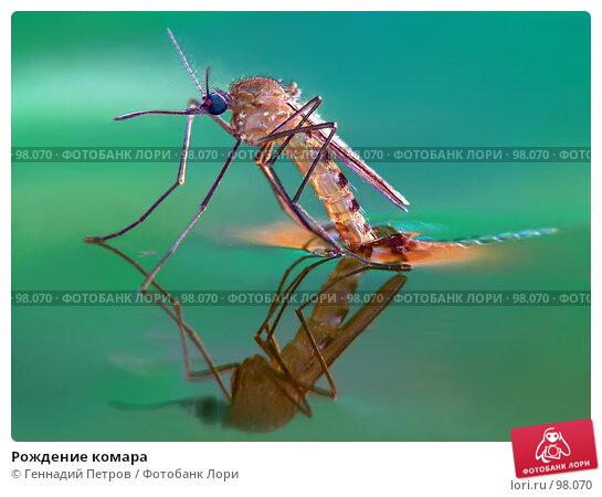 Рождение комара, фото № 98070, снято 24 января 2017 г. (c) Геннадий Петров / Фотобанк Лори