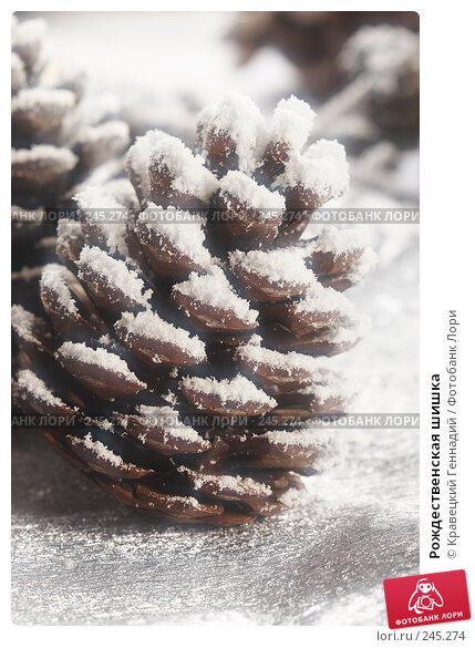 Рождественская шишка, фото № 245274, снято 14 декабря 2005 г. (c) Кравецкий Геннадий / Фотобанк Лори