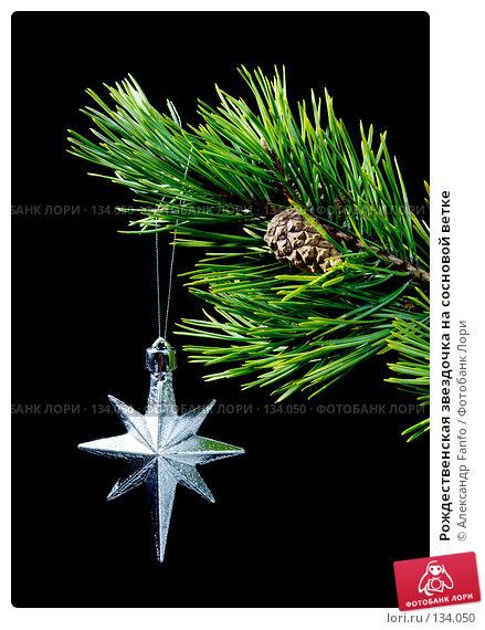 Рождественская звездочка на сосновой ветке, фото № 134050, снято 30 апреля 2017 г. (c) Александр Fanfo / Фотобанк Лори