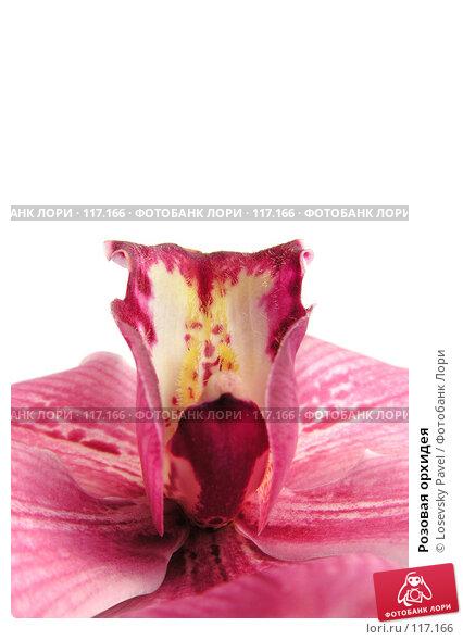 Розовая орхидея, фото № 117166, снято 1 января 2005 г. (c) Losevsky Pavel / Фотобанк Лори