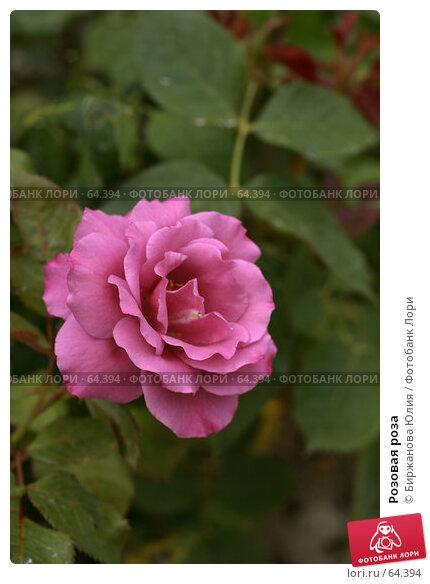 Купить «Розовая роза», фото № 64394, снято 30 июня 2007 г. (c) Биржанова Юлия / Фотобанк Лори