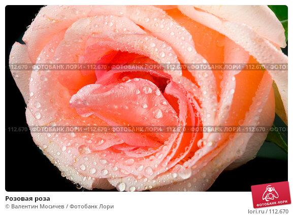 Розовая роза, фото № 112670, снято 10 февраля 2007 г. (c) Валентин Мосичев / Фотобанк Лори
