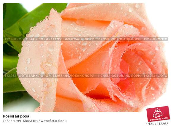 Розовая роза, фото № 112958, снято 16 февраля 2007 г. (c) Валентин Мосичев / Фотобанк Лори