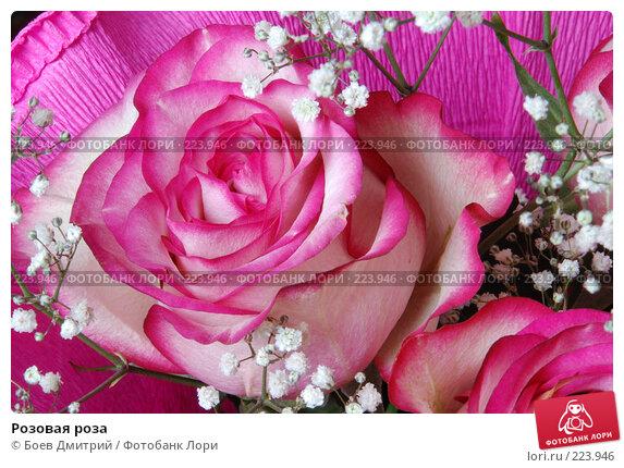 Купить «Розовая роза», фото № 223946, снято 15 марта 2008 г. (c) Боев Дмитрий / Фотобанк Лори