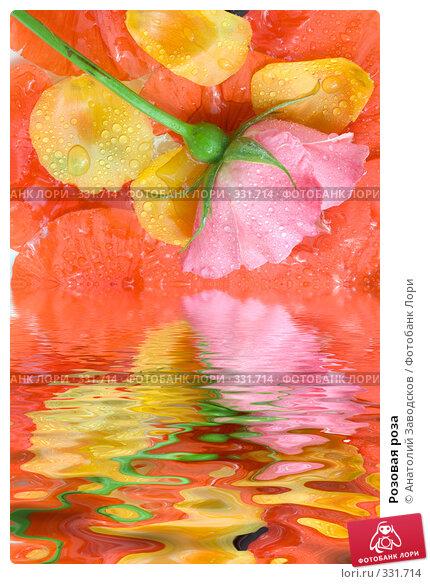 Розовая роза, фото № 331714, снято 28 мая 2007 г. (c) Анатолий Заводсков / Фотобанк Лори