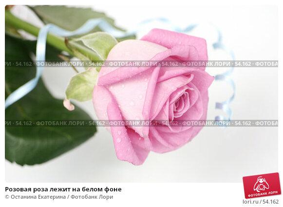 Купить «Розовая роза лежит на белом фоне», фото № 54162, снято 29 марта 2007 г. (c) Останина Екатерина / Фотобанк Лори
