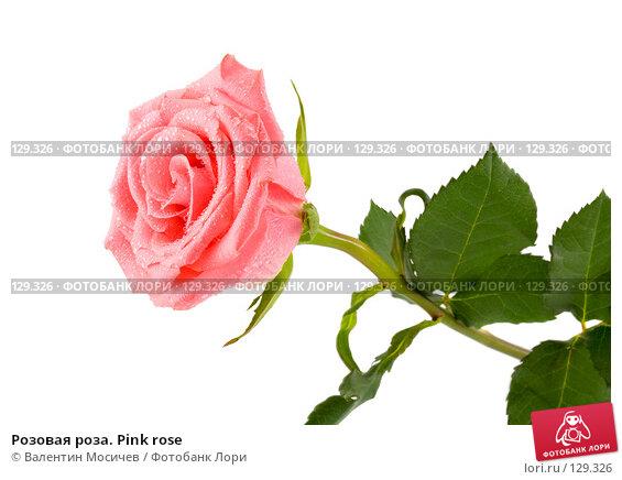 Розовая роза. Pink rose, фото № 129326, снято 3 марта 2007 г. (c) Валентин Мосичев / Фотобанк Лори