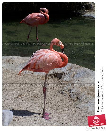 Розовые фламинго, фото № 242082, снято 27 июля 2006 г. (c) Дима Рогожин / Фотобанк Лори