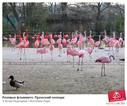 Розовые фламинго. Пражский зоопарк, фото № 240302, снято 15 марта 2008 г. (c) Юлия Селезнева / Фотобанк Лори
