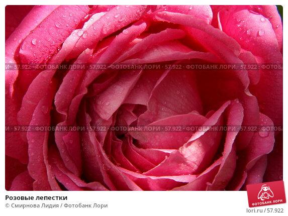 Розовые лепестки, фото № 57922, снято 1 июля 2007 г. (c) Смирнова Лидия / Фотобанк Лори