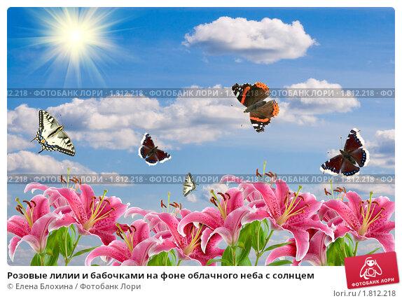 Купить «Розовые лилии и бабочками на фоне облачного неба с солнцем», фото № 1812218, снято 6 июня 2010 г. (c) Елена Блохина / Фотобанк Лори