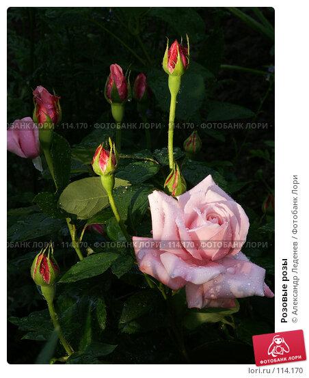 Розовые розы, фото № 114170, снято 22 июня 2006 г. (c) Александр Леденев / Фотобанк Лори