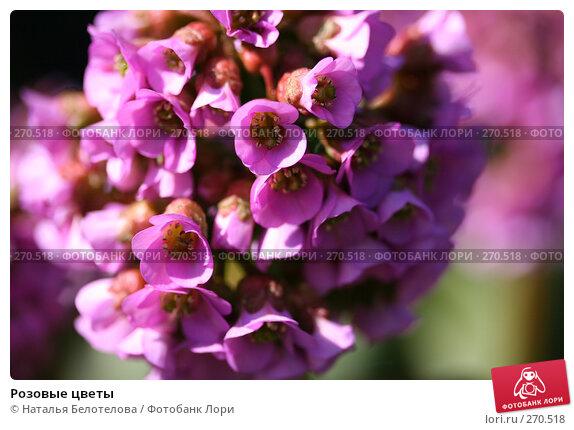 Розовые цветы, фото № 270518, снято 3 мая 2008 г. (c) Наталья Белотелова / Фотобанк Лори