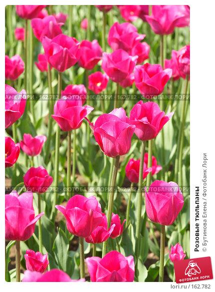 Розовые тюльпаны, фото № 162782, снято 28 мая 2007 г. (c) Бутинова Елена / Фотобанк Лори