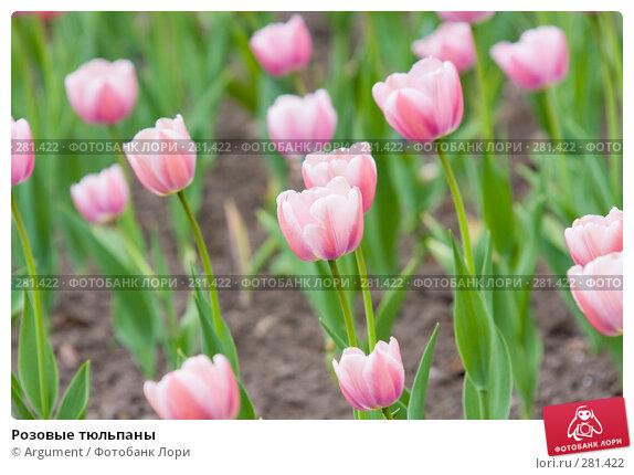 Розовые тюльпаны, фото № 281422, снято 10 мая 2008 г. (c) Argument / Фотобанк Лори
