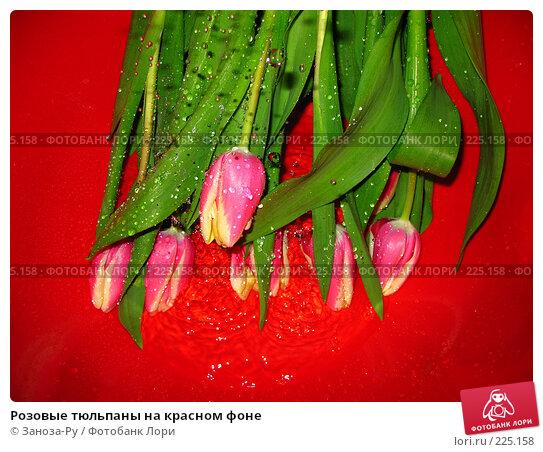 Розовые тюльпаны на красном фоне, фото № 225158, снято 8 марта 2008 г. (c) Заноза-Ру / Фотобанк Лори