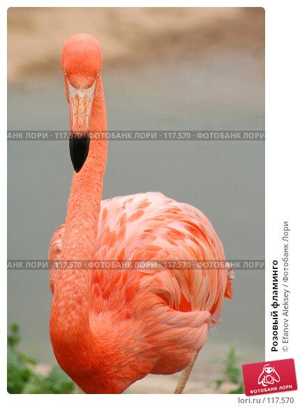 Купить «Розовый фламинго», фото № 117570, снято 13 июля 2006 г. (c) Efanov Aleksey / Фотобанк Лори