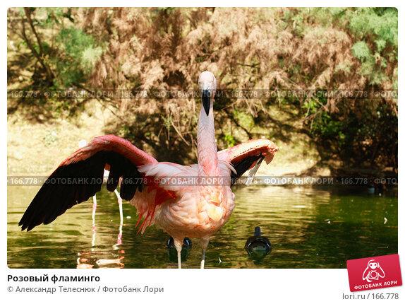 Купить «Розовый фламинго», фото № 166778, снято 22 сентября 2007 г. (c) Александр Телеснюк / Фотобанк Лори