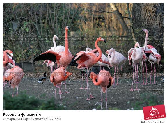 Розовый фламинго, фото № 175462, снято 10 декабря 2007 г. (c) Марюнин Юрий / Фотобанк Лори