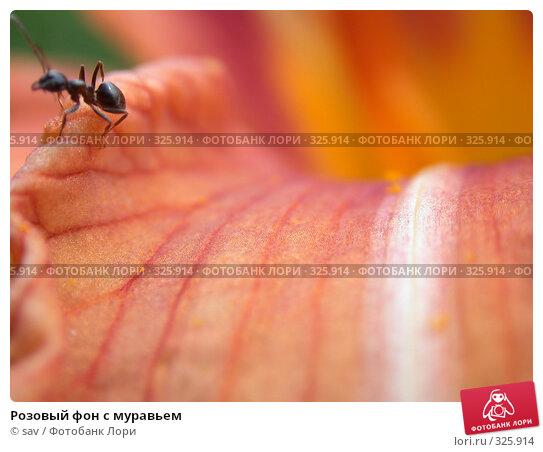 Розовый фон с муравьем, фото № 325914, снято 14 июля 2006 г. (c) sav / Фотобанк Лори