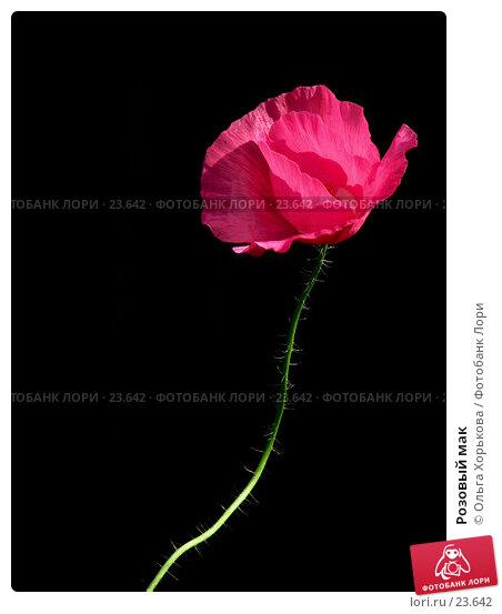 Купить «Розовый мак», фото № 23642, снято 2 августа 2006 г. (c) Ольга Хорькова / Фотобанк Лори