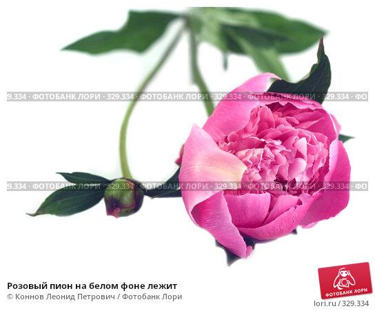 Купить «Розовый пион на белом фоне лежит», фото № 329334, снято 20 июня 2008 г. (c) Коннов Леонид Петрович / Фотобанк Лори