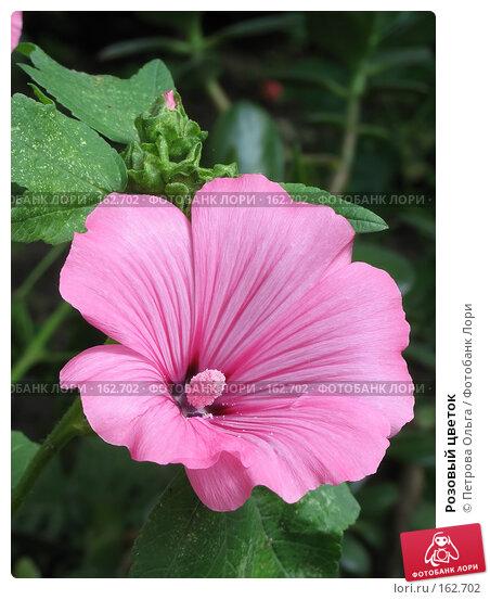 Розовый цветок, фото № 162702, снято 28 июля 2007 г. (c) Петрова Ольга / Фотобанк Лори