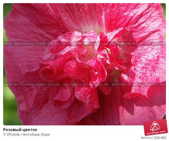 Розовый цветок, фото № 226402, снято 16 августа 2006 г. (c) VPutnik / Фотобанк Лори