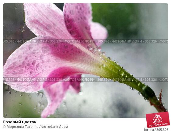 Розовый цветок, фото № 305326, снято 30 мая 2008 г. (c) Морозова Татьяна / Фотобанк Лори