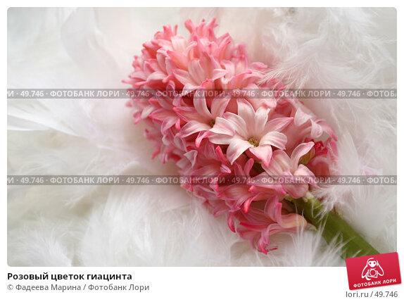 Розовый цветок гиацинта, фото № 49746, снято 10 февраля 2007 г. (c) Фадеева Марина / Фотобанк Лори