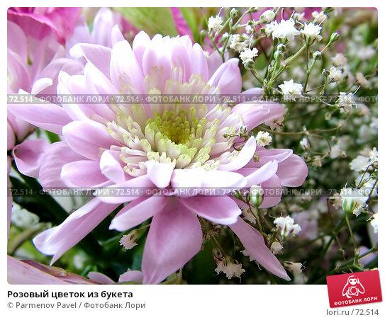 Розовый цветок из букета, фото № 72514, снято 16 марта 2006 г. (c) Parmenov Pavel / Фотобанк Лори