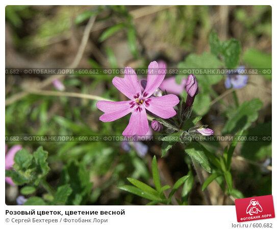 Купить «Розовый цветок, цветение весной», фото № 600682, снято 19 мая 2005 г. (c) Сергей Бехтерев / Фотобанк Лори
