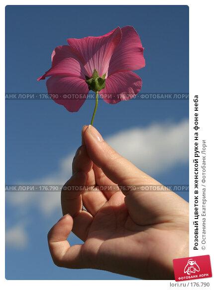 Розовый цветок в женской руке на фоне неба, фото № 176790, снято 10 августа 2007 г. (c) Останина Екатерина / Фотобанк Лори