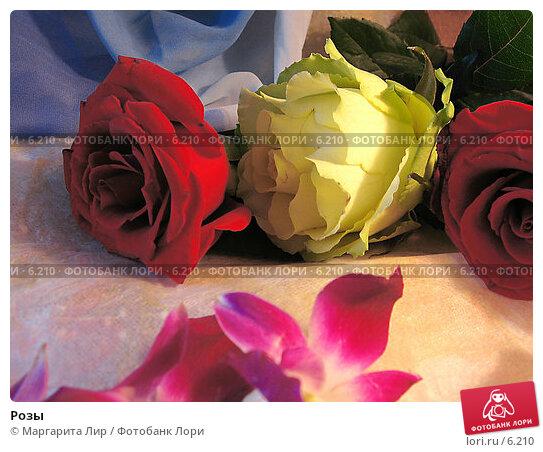 Купить «Розы», фото № 6210, снято 11 июня 2006 г. (c) Маргарита Лир / Фотобанк Лори