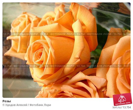 Розы, фото № 13754, снято 24 ноября 2006 г. (c) Удодов Алексей / Фотобанк Лори