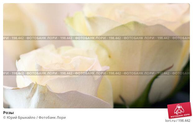 Розы, фото № 198442, снято 3 февраля 2008 г. (c) Юрий Брыкайло / Фотобанк Лори