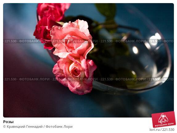 Розы, фото № 221530, снято 3 августа 2005 г. (c) Кравецкий Геннадий / Фотобанк Лори