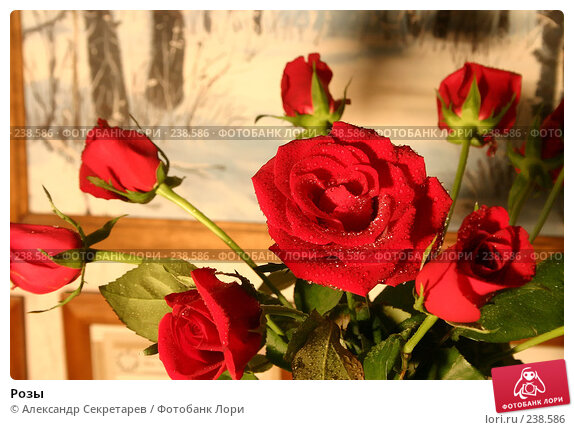 Купить «Розы», фото № 238586, снято 19 апреля 2018 г. (c) Александр Секретарев / Фотобанк Лори