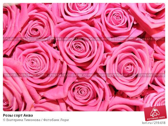 Розы сорт Аква, фото № 219618, снято 3 марта 2007 г. (c) Екатерина Тимонова / Фотобанк Лори