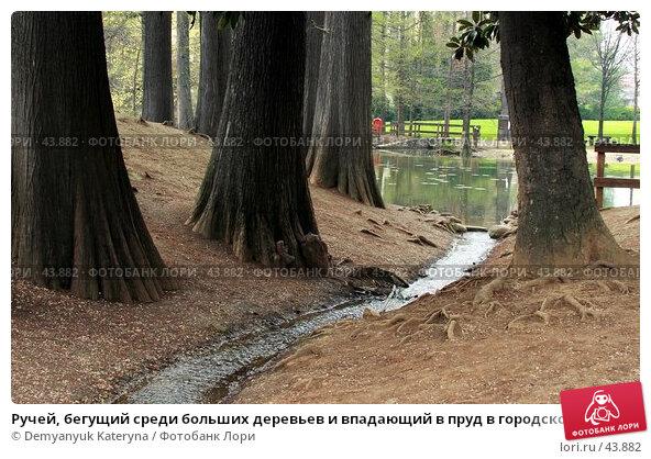 Ручей, бегущий среди больших деревьев и впадающий в пруд в городском парке, фото № 43882, снято 31 марта 2007 г. (c) Demyanyuk Kateryna / Фотобанк Лори